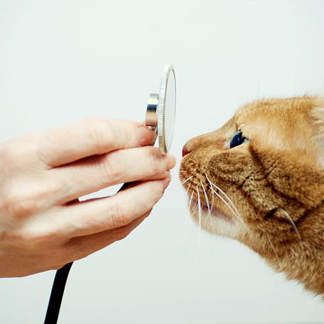 Internal Medicine - Southwoods Animal Hospital