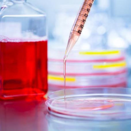 Laboratory Services - Southwoods Animal Hospital