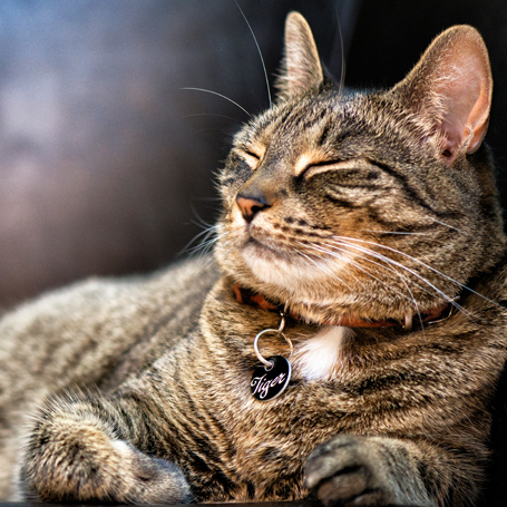 Pet Allergies - Southwoods Animal Hospital